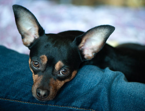 Anxiety in your Pets