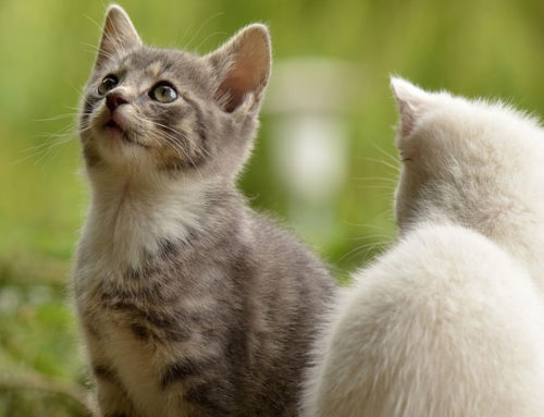 4 Things To Look For In Your Cat's Food