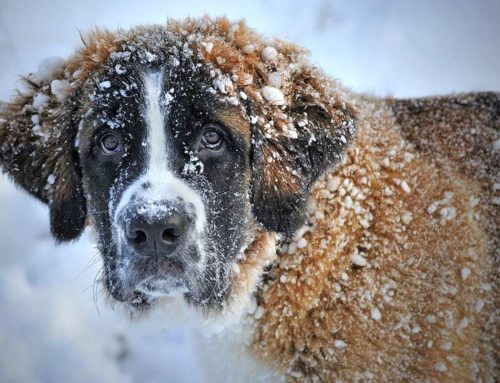 Keeping Your Pet Safe this Winter